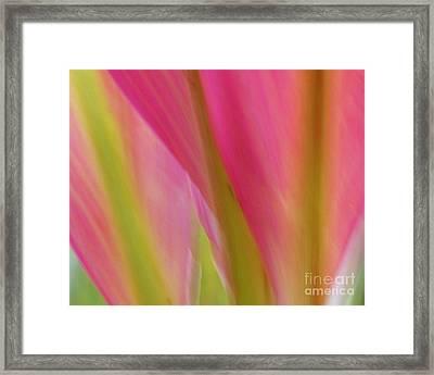 Ti Leaves Framed Print