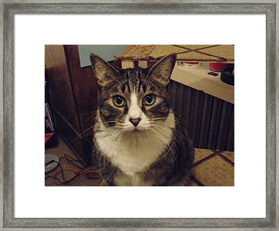 Tibet In Charge Framed Print by DM Lane