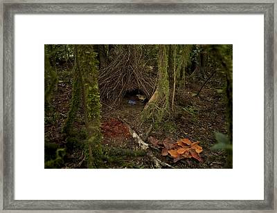 Tidy Piles Of Leaves, Fungi And Berries Framed Print by Tim Laman