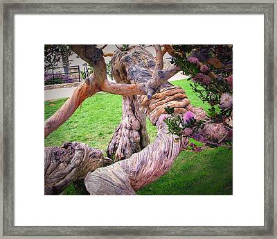 Tied In Knots Framed Print by Diane Wood