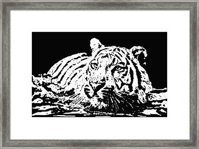 Tiger 2 Framed Print by Lori Jackson
