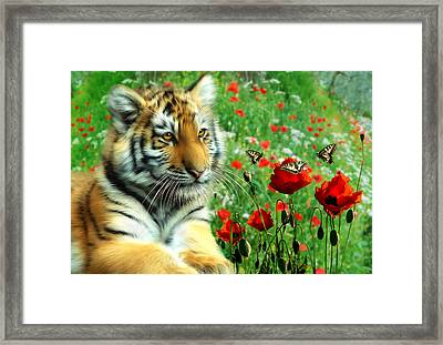 Tiger Butterflies Framed Print by Julie L Hoddinott