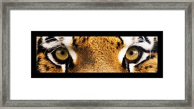 Tiger Eyes Framed Print by Sumit Mehndiratta
