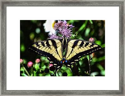 Tiger Feeding Framed Print by Don Mann