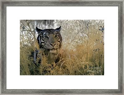 Tiger In Infrared Framed Print