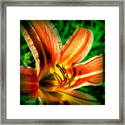 Tiger Lily Series 1of4 #flowers Framed Print