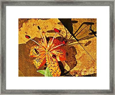Tiger Lily Still Life  Framed Print by Chris Berry