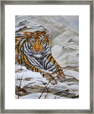 Tiger Framed Print by Meg Keeling