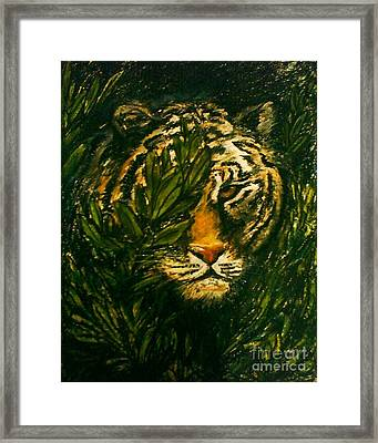 Tiger On The Prowl Framed Print by C Ballal