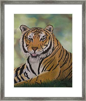 Tiger Framed Print by Shadrach Ensor