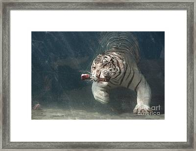 Tiger Shark Framed Print by Buck Forester