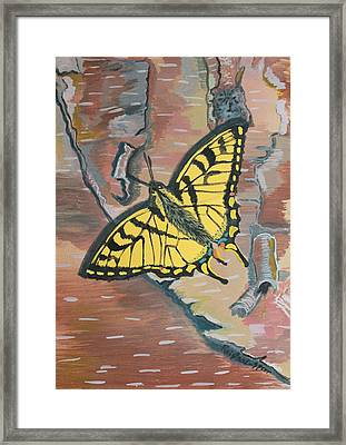 Tiger Swallowtail Framed Print by Amy Reisland-Speer