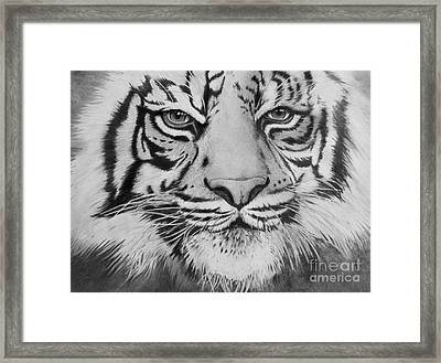 Tiger's Eyes Framed Print