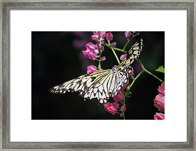 Tilted Pink Framed Print