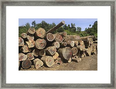 Timber At A Logging Area, Danum Valley Framed Print
