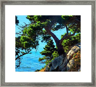 Timber Cove In Sonoma Coast Framed Print by Russ Harris