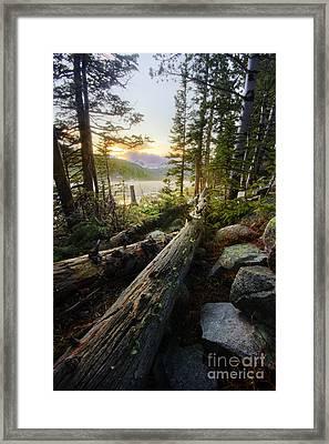 Timber Framed Print by Tyler Porter