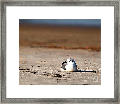 Framed Print featuring the photograph Time Alone by Luana K Perez