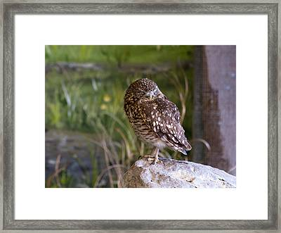 Time For A Wee Snooze Framed Print by Dick Jones