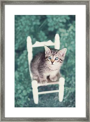 Time Out Framed Print by Amy Tyler
