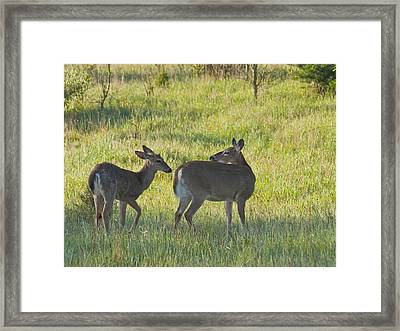 Time To Be On Your Own Son 5981 Framed Print by Michael Peychich