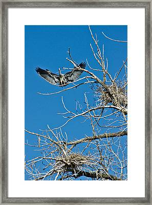 Time To Nest Framed Print