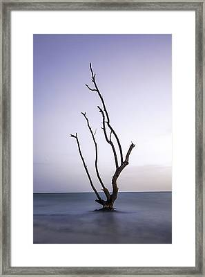 Timeless Tree Framed Print by Nick  Shirghio