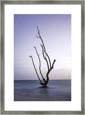 Timeless Tree Framed Print