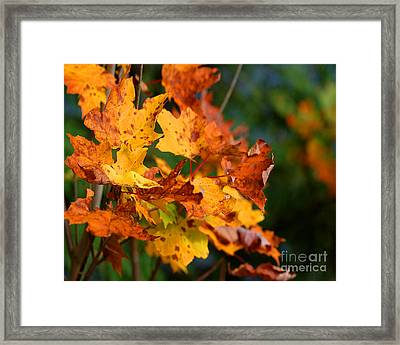Times They Are A Changing Framed Print by Diane E Berry