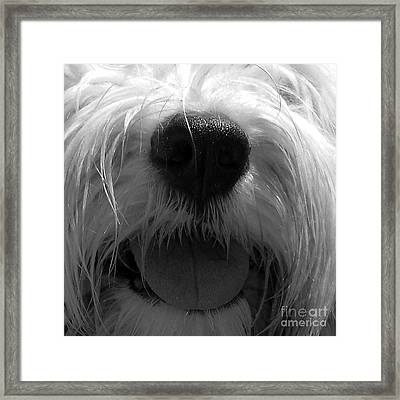 Timmy Tongue Framed Print by Alene Sirott-Cope