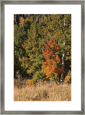 Tim's Tree Framed Print