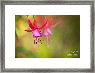 Tinkerbells Ball Gown Framed Print by Beve Brown-Clark Photography
