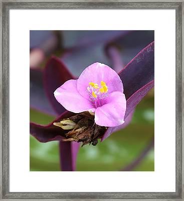Tiny And Delicate Framed Print