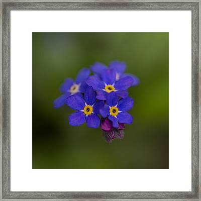 Tiny Blossoms Framed Print by Andreas Levi