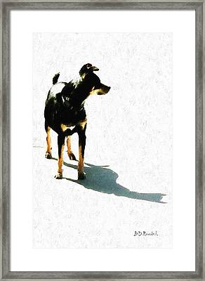'tiny' Framed Print by Brian D Meredith