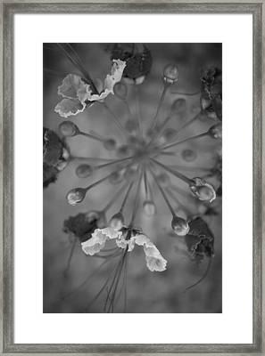 Tiny Cosmology Framed Print