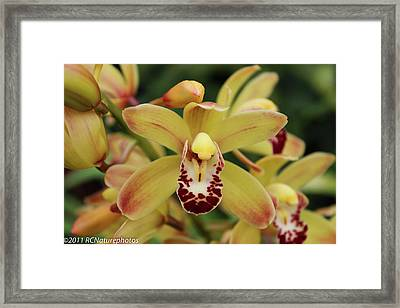 Framed Print featuring the photograph Tiny Dancer by Rachel Cohen