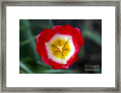 Tiny Fireball Framed Print