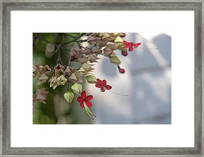 Framed Print featuring the photograph Tiny Flowers by Lou Belcher