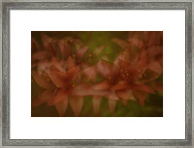 Framed Print featuring the photograph Tiny Ghost Lily by Sherri Meyer