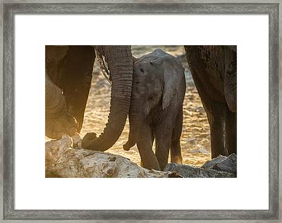 Tiny Trunk Framed Print