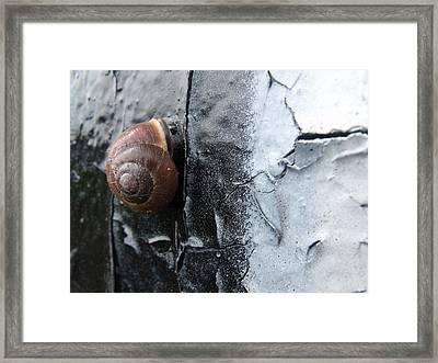 Tiny Vandal Framed Print by Lee Versluis