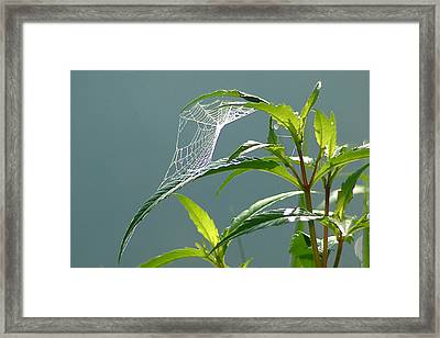 Framed Print featuring the photograph Tiny Web by Peg Toliver