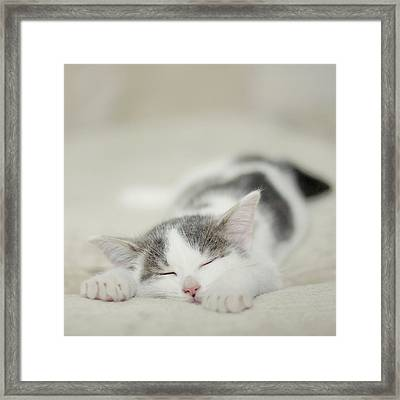 Tiny White And Grey Kitten Sleeping On The Couch Framed Print by Cindy Prins