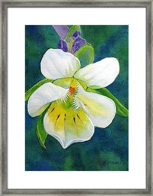 Tiny Wildflower Framed Print by Debra Spinks