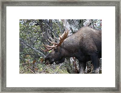 Framed Print featuring the photograph Tired Eyes by Doug Lloyd
