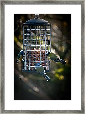 Tits At Teatime Framed Print by Chris Boulton