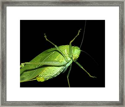 To An Insect Pretty Katydid Framed Print by Tracie Kaska