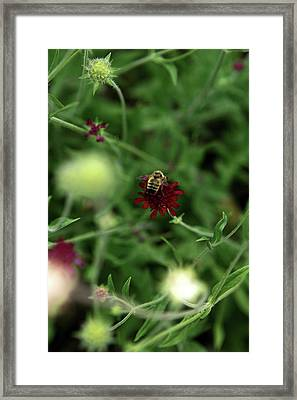 Framed Print featuring the photograph To Bee by Lorraine Devon Wilke