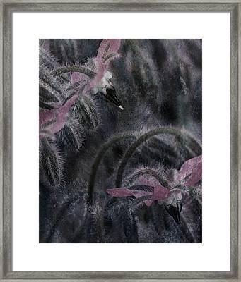 To Blossom Framed Print by Bonnie Bruno